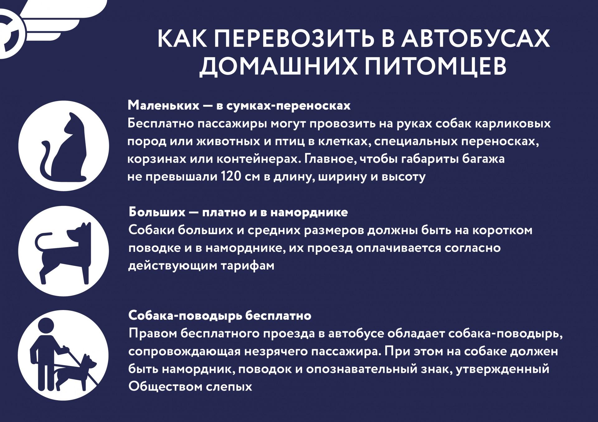 Post-dlya-VK_kak-perevozit-v-avtobusah-domaschnih-pitomzev-01.jpg
